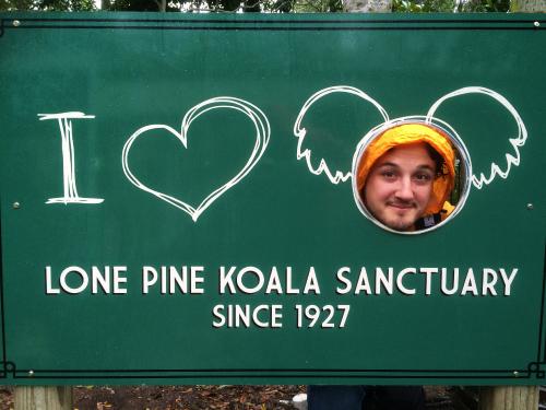 Cartel Lone Pine Koala