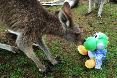 Yoshi con canguro